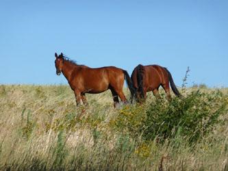 5_Saint_Thome_chevaux